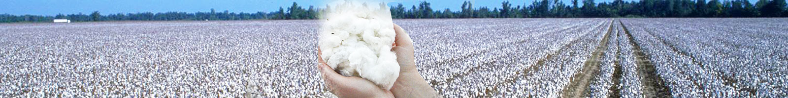 Wash Cotton Seed Oil, Wash Cotton Oil, Wash Cottonseed Oil, Wash Cottonseed Oils, Wash Cotton Seed Oil Supplier,Manufacturer of Wash Cotton Oil in Gujarat,India